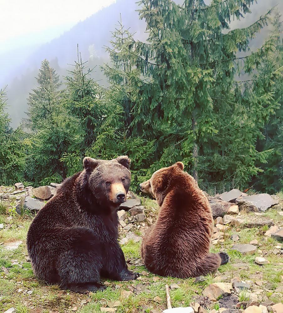 Реабилитационный центр медведей, Украина
